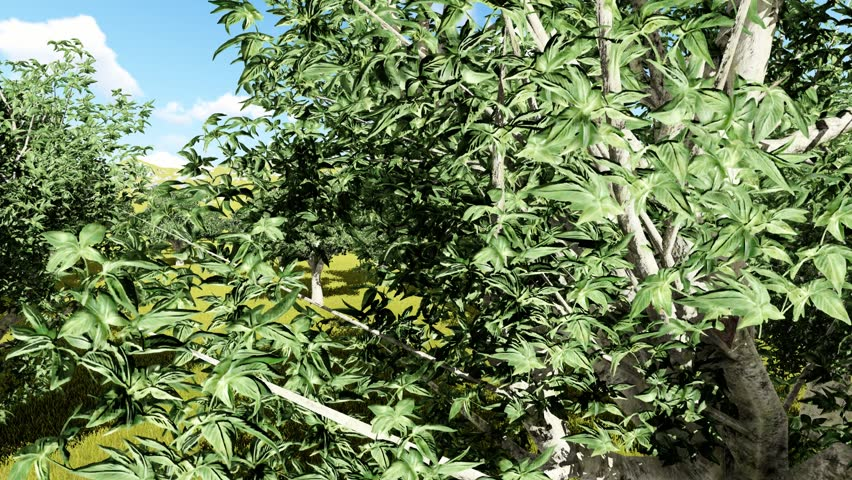 Header of Aesculus californica
