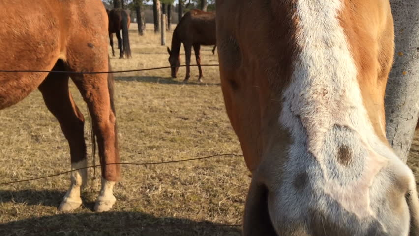 Man gives the horse a piece of bread first person view. Pov video. | Shutterstock HD Video #15946333