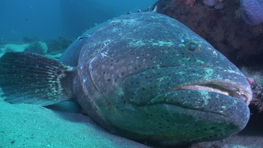 self proclaimed grouper capital of the world - 852×480