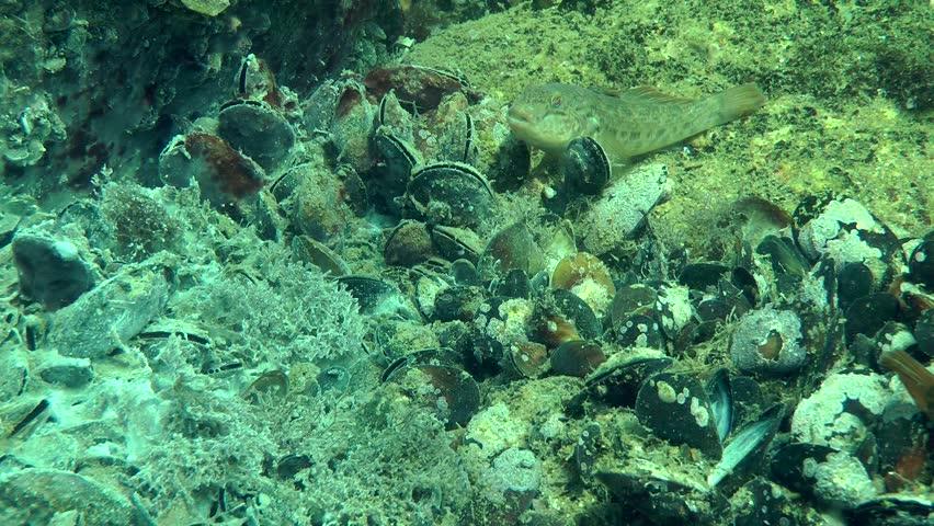nieuwkomers aliexpress online te koop Settlement of Mussels Overgrown Fungal Stock Footage Video (100%  Royalty-free) 16188226   Shutterstock