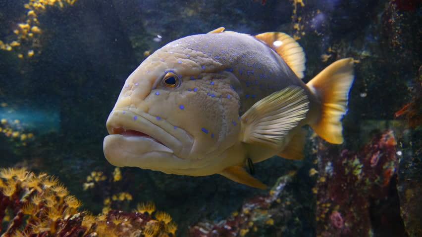 Header of grouper