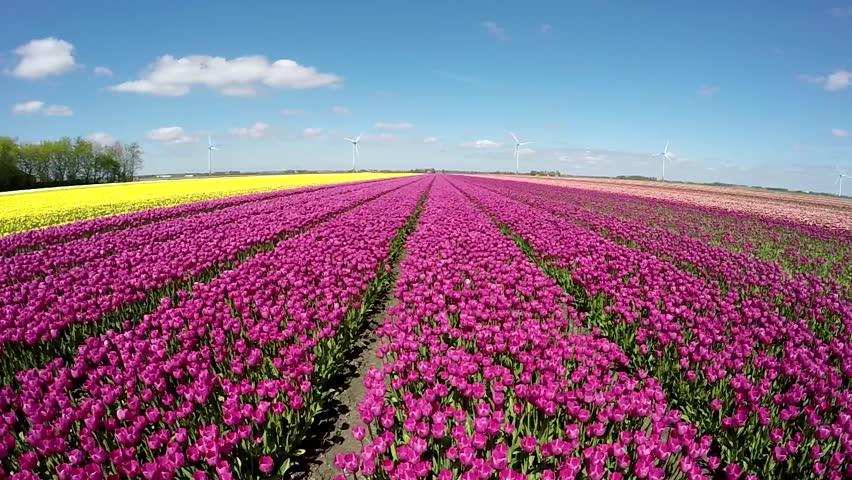 a drone with Holland Flowers Garden on 52822819 also Image 1gmr moreover Jens Fiedler furthermore Tile as well 60249123.