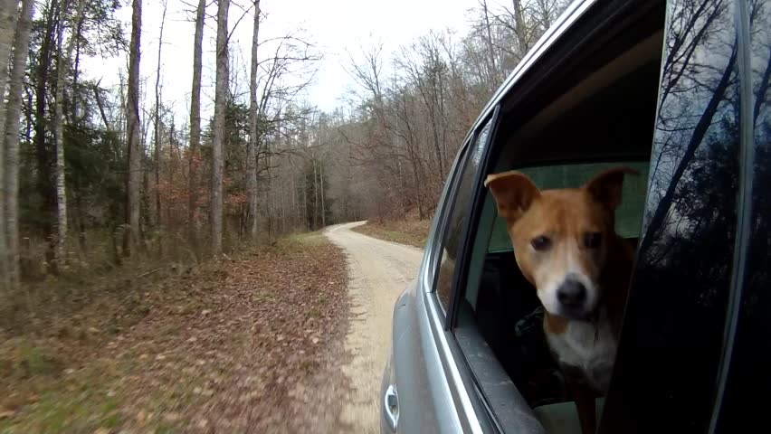 Dog enjoying a ride on a rural forest road crossing stream. Heeler mix enjoying the wind and watching the world go by outside Beattyville, KY.