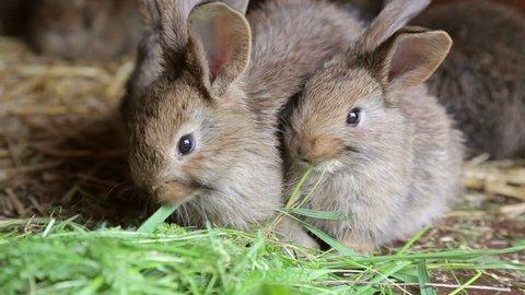 Bunnies in hutch eating fresh grass