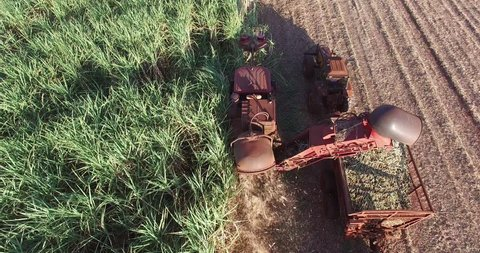 Sugar Cane - Mechanical harvesting of sugarcane in a late afternoon in Brazil - Top view