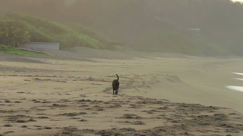 Dog alone on the Beach | Shutterstock HD Video #1662136