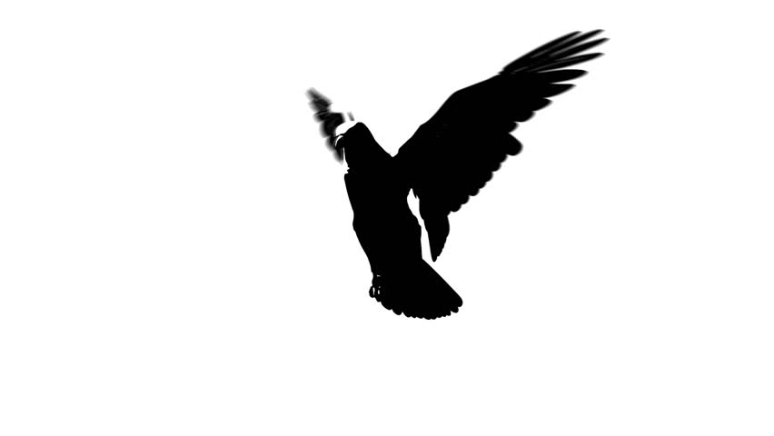 silhouette looping flying eagle half view