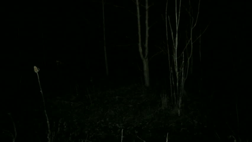 spooky lighting. POV Steadicam Running Through Dark Spooky Forest At Night. Away And Escaping From Scary Lighting S