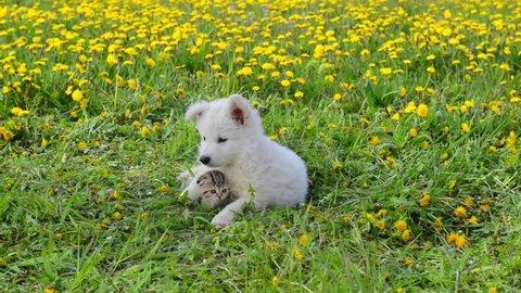 Puppy embracing kitten on green grass