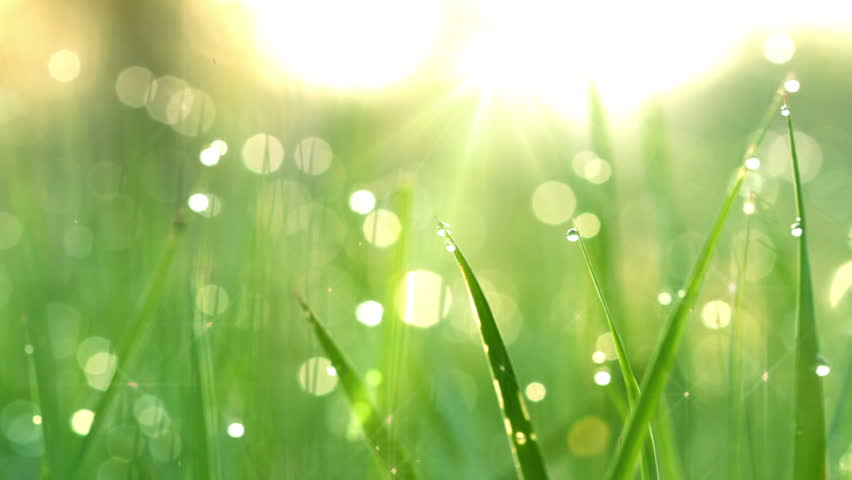 Blurred grass background with water drops. HD shot with motorized slider.  | Shutterstock HD Video #1717921