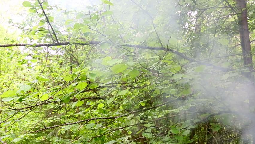Smoke from a fire rises | Shutterstock HD Video #17307946