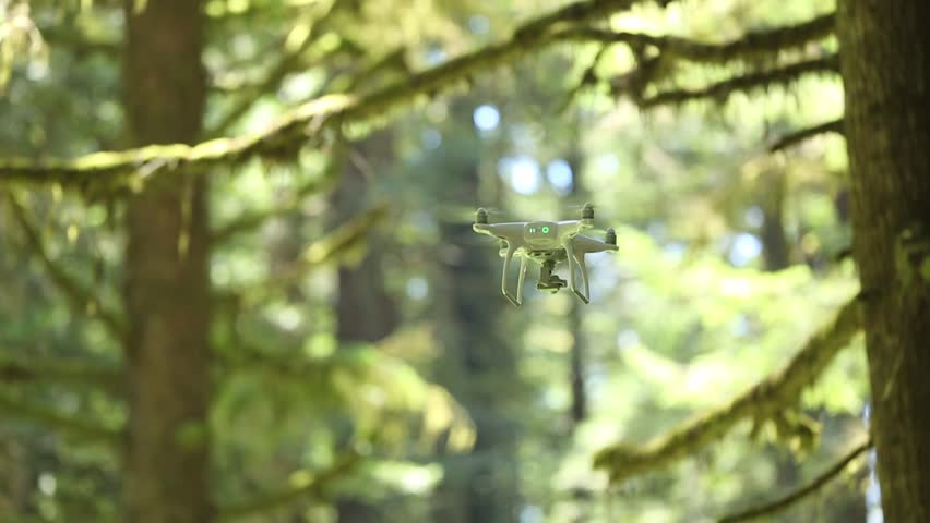 Phantom drone hovering in front of foliage of Redwood forest | Shutterstock HD Video #17439316