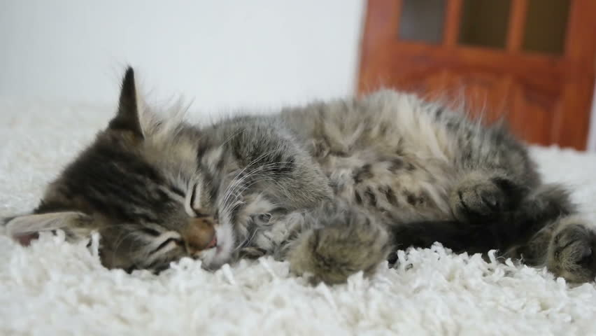 cute kitten sleeping in the room #17530216