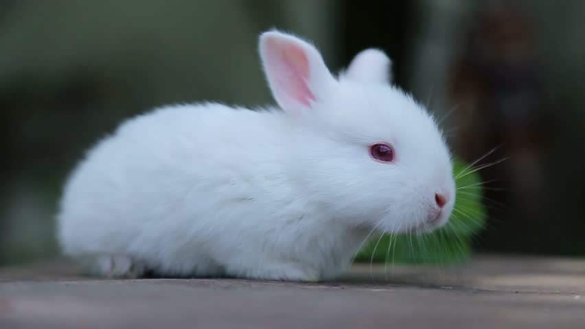 Rabbit On Green Grass, White S...