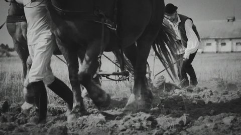 Farmer plowing a field with two horses. Black and white. Transylvania (central part of Romania)
