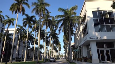 Camera Movement through the royal palm alley at West Palm beach, Florida. Smooth motion. Nice picture