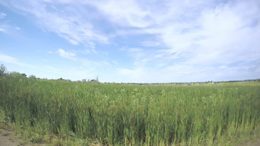 Car driving through grassland at Cherry Creek State Park.-POV point of view.