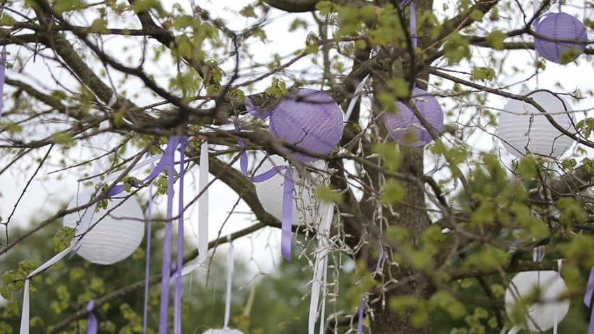 Wedding Decorations White Chinese Lanterns In The Trees