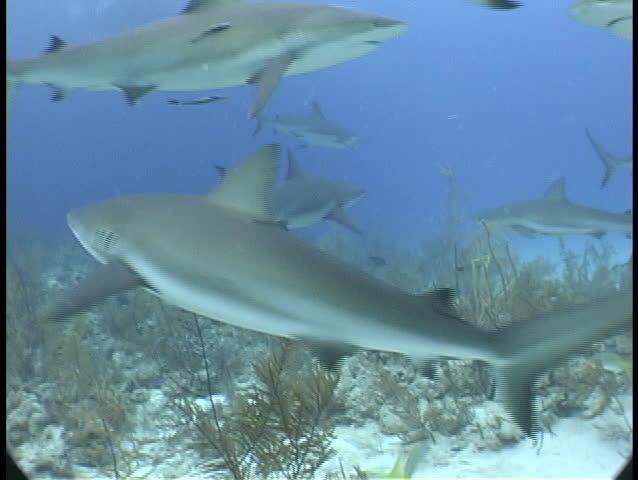School of shark swimming   Shutterstock HD Video #1789316