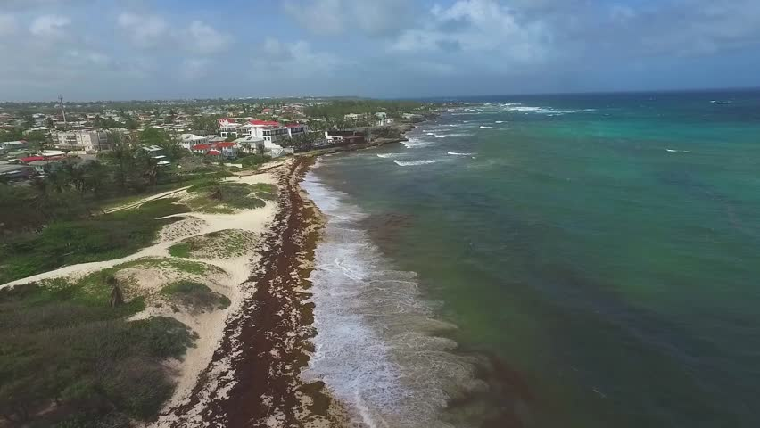 Aerial View of Sargassum Algae Stock Footage Video (100% Royalty-free)  17936896 | Shutterstock
