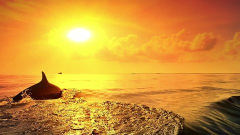 Dolphins swim in sea at sunset with bright evening sun and yellow sky on horizon