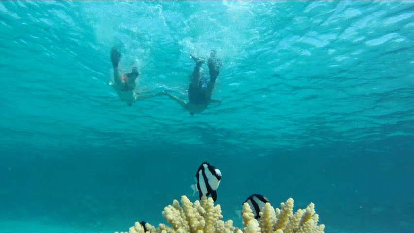 Young couple snorkelers swim towards the camera, holding hands, over the coral with fish Dascyllus in the Red Sea.