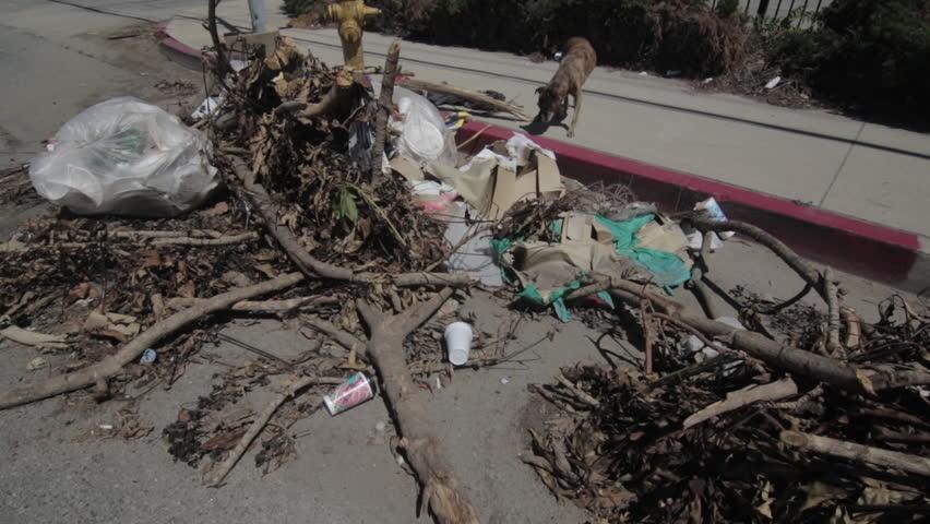 Dog Running by Trash Pile 2   Shutterstock HD Video #18131926