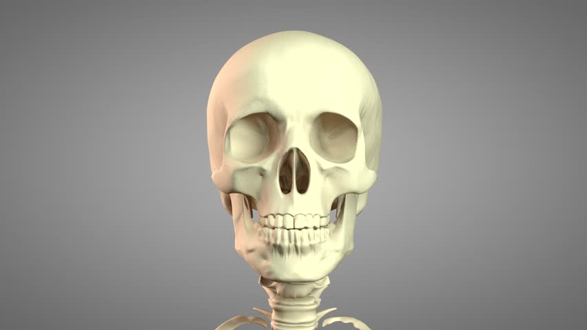3D-Rendering illustration of Skeleton rotation with Alpha Cannel