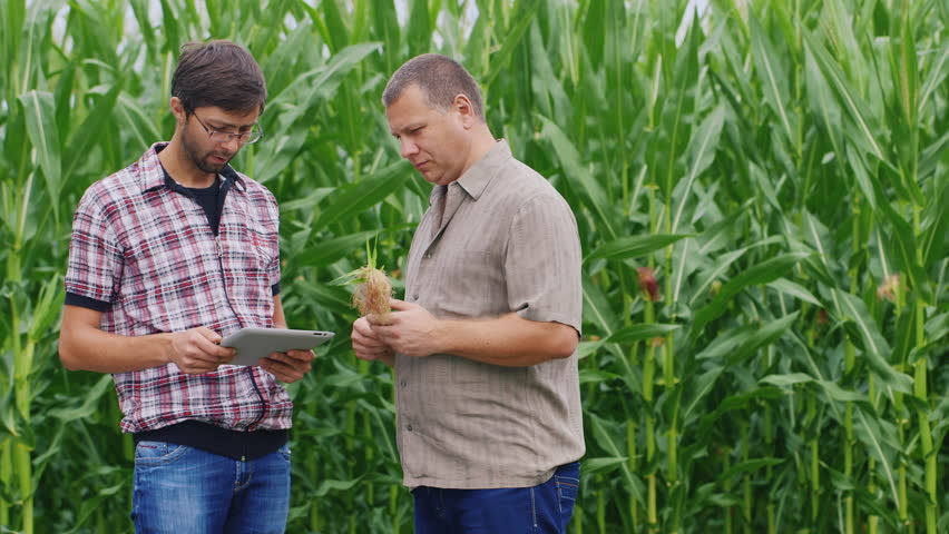 Two farmers working near the cornfield. Take a look at the tablet, studying ear of corn | Shutterstock HD Video #18190003