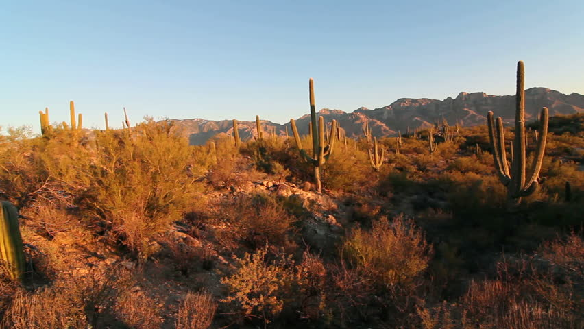 Wide angle crane shot of Tucson, Arizona landscape featuring giant saguaro cactus tinged with golden, red glow at sunset. 1080p