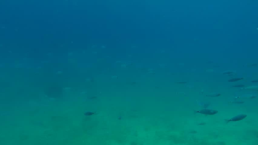Seamless Underwater Texture seamless looping of a greenish underwater texture stock footage