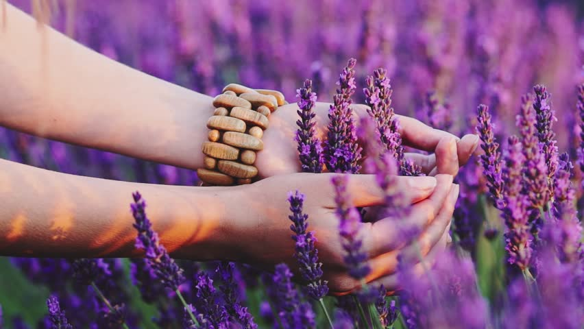 Close-up of woman's hand running through sunny lavender field. SLOW MOTION 120 fps. Girl's hand touching purple lavender flowers closeup. Plateau du Valensole, Provence, South France, Europe. | Shutterstock HD Video #18570581