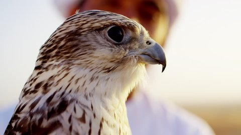 Trained falcon tethered to male owner wearing traditional Arabic dress