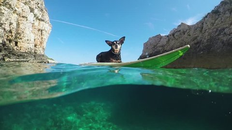 SLOW MOTION, HALF UNDERWATER, CLOSE UP: Adorable fearless adventures senior pet dog lying on surfboard and surfing in crystal clear green ocean water between dangerous sharp rocky walls in Croatia