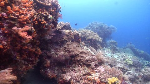 Ocean scenery on shallow coral reef, HD, UP23908