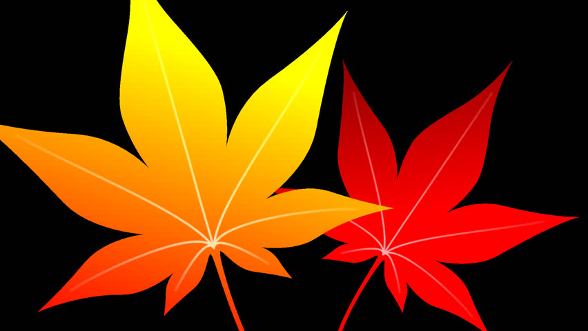 Autumn leaves maple opening frame 2 pattern alpha channel | Shutterstock HD Video #18666266