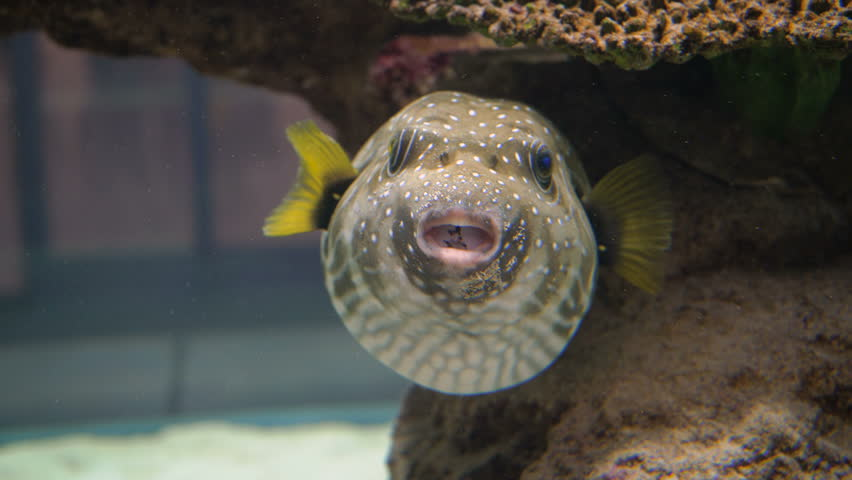 Free Aquarium Stock Video Footage 126 Free Downloads