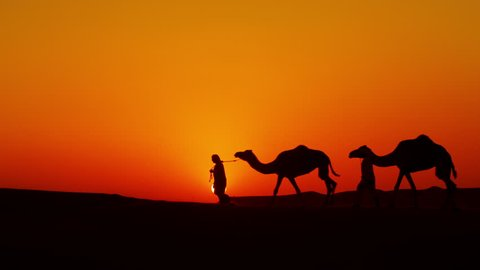 Aerial drone of Middle Eastern male camel owners in desert convoy