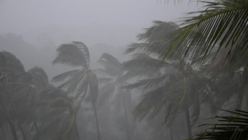 Bad Weather and Low Season on Tropical Island. Palm Trees in Rain
