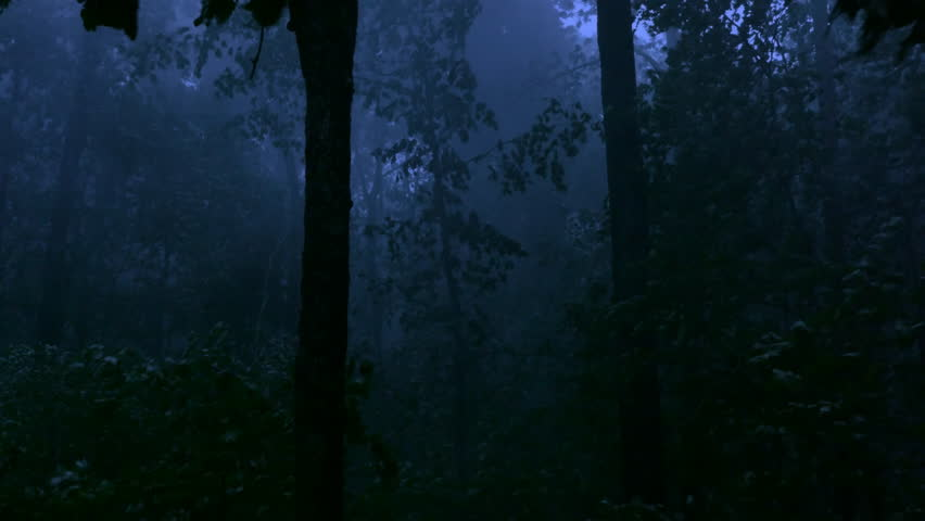 A handheld shot made in the middle of a forest in the middle of a storm at night with cinematic night shot lighting as the winds and rain beats down trees in a violent display revealing awesome power. | Shutterstock HD Video #19116907