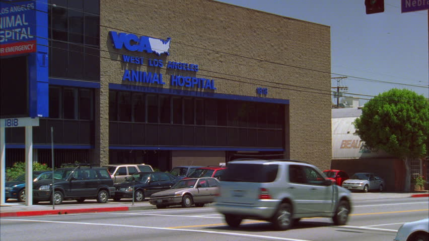 Street Veterinary Day Vca We Street Los Angeles Animal Hospital Veterinary Clinic Raked Vca Animal Hospitals Day Vca We Street Los Stock Footage Video 100 Royaltyfree