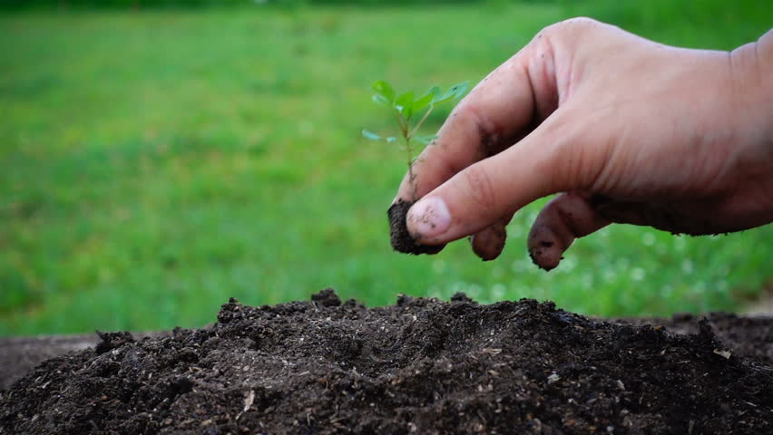 Woman and child hand planting small tree in the soil for Soil 7t7 woman