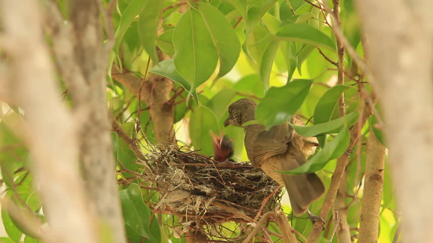 baby birds waiting for their mother to bring food