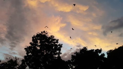 Flock of crows sitting in trees and flying away at dusk