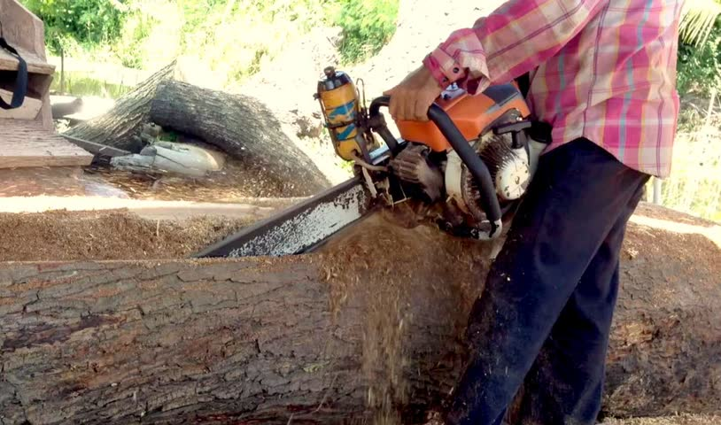 A worker man stand by your left leg control wood log for used electric saw cutting tree in forest. | Shutterstock HD Video #19626556