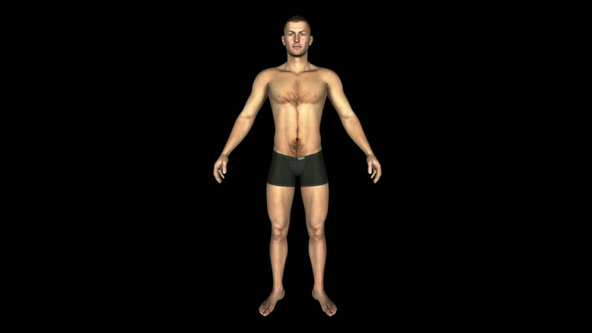 The Human Normal Body Animation. Loop. Alpha Matte