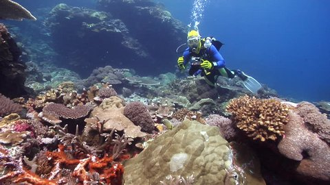 Point and shoot photographer feeding on shallow coral reef with Redfin butterflyfish in Solomon Islands, HD, UP19026