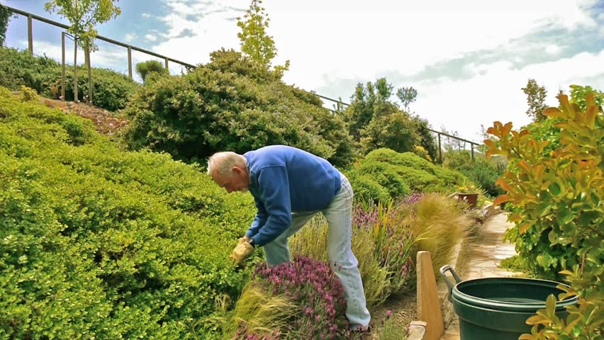 Active elderly man clipping bushes in his hillside garden
