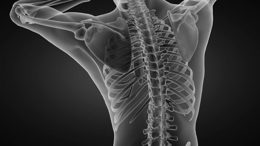 Stock video of wrist anatomy   4366163   Shutterstock