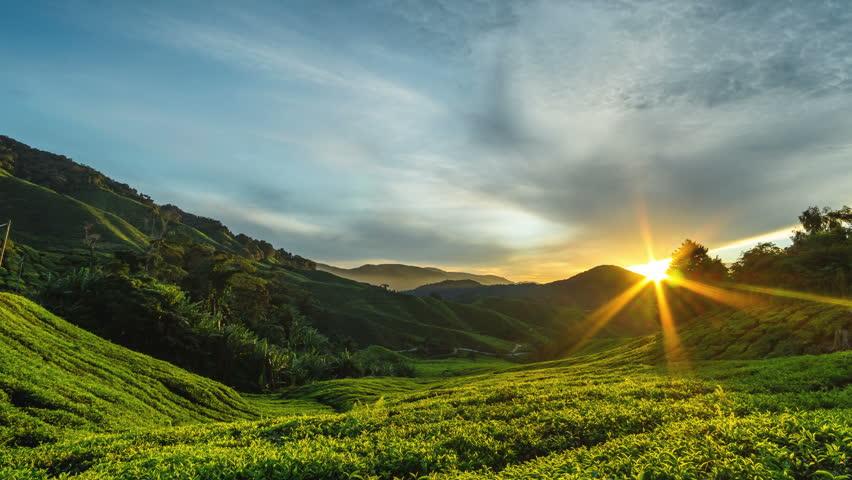 Cameron Highlands Sunrise time lapse at green tea farm mountain. Dramatic moving cloud timelapse in nature landscape on sunshine morning. #19875544
